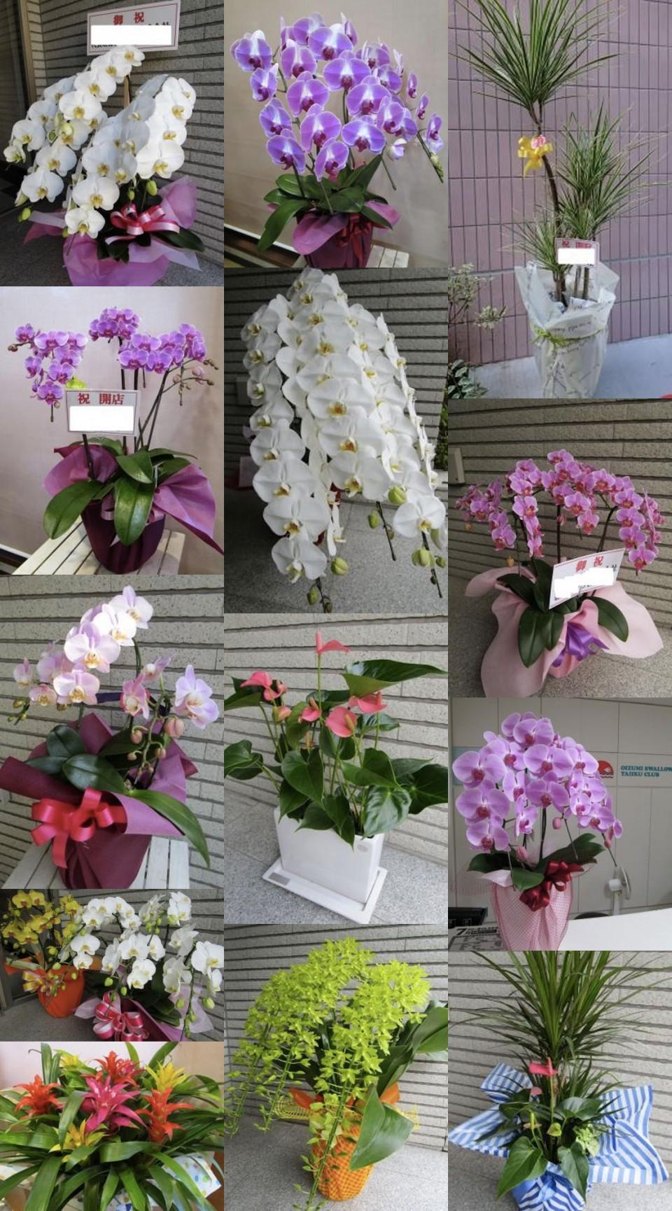 archives_murakami878_orchid